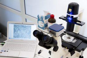 Laboratorium Hodowli Komórek i Tkanek