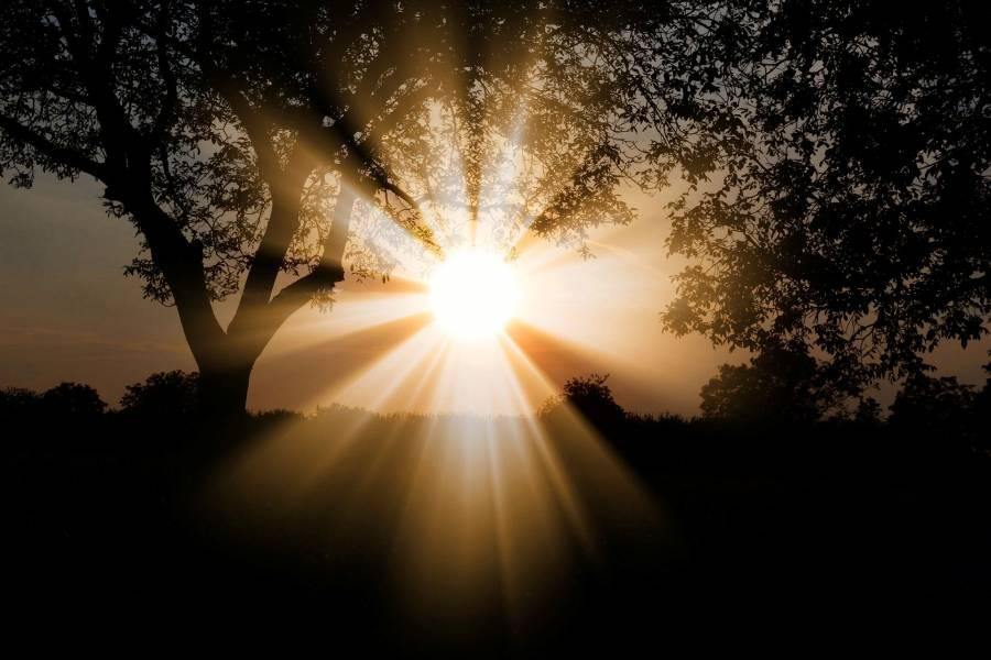 Jaki wpływ nanasze organizmy wywiera światło?